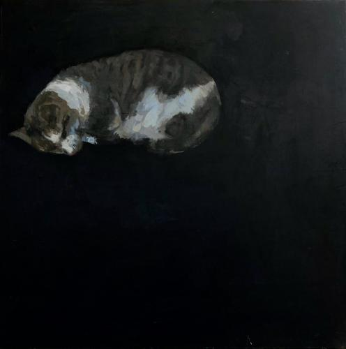 sleeping grey tabby cat with black background